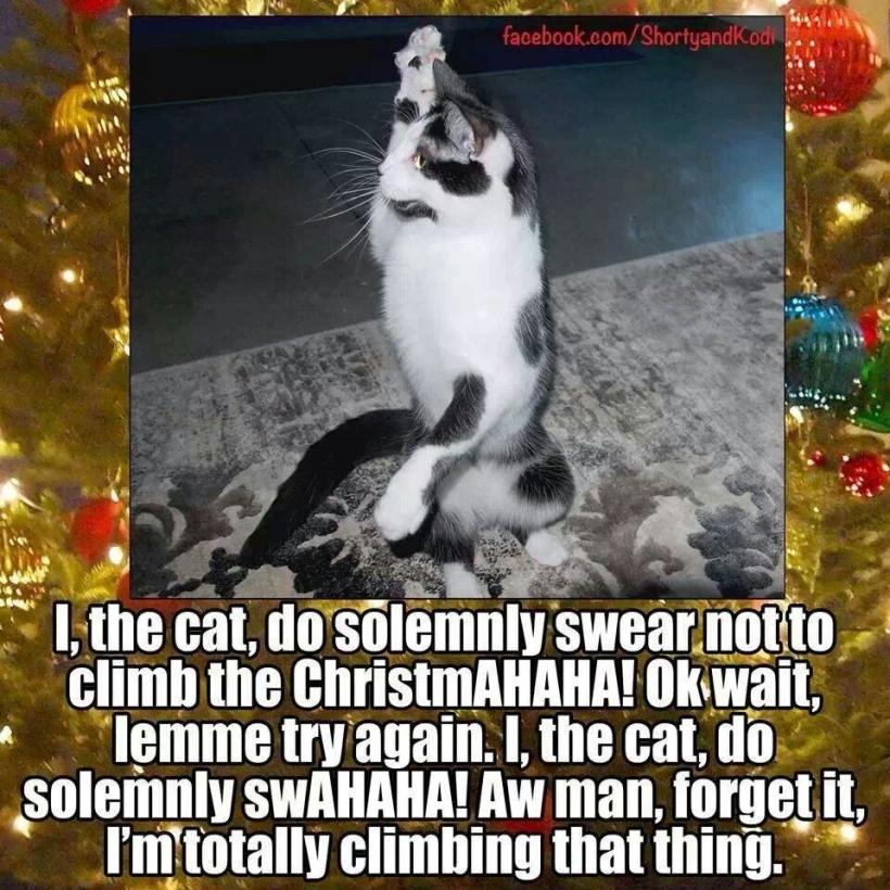 cat oath