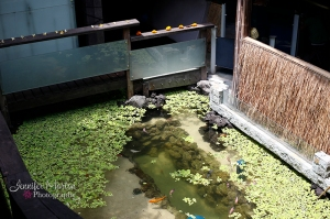 clear_pond 2